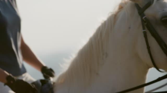 vidéos et rushes de floue de mouvement du cheval - sans mise au point and équilibre