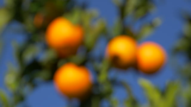 blurred motion, sunlight on ripe oranges against clear blue sky - ascorbic acid stock videos & royalty-free footage