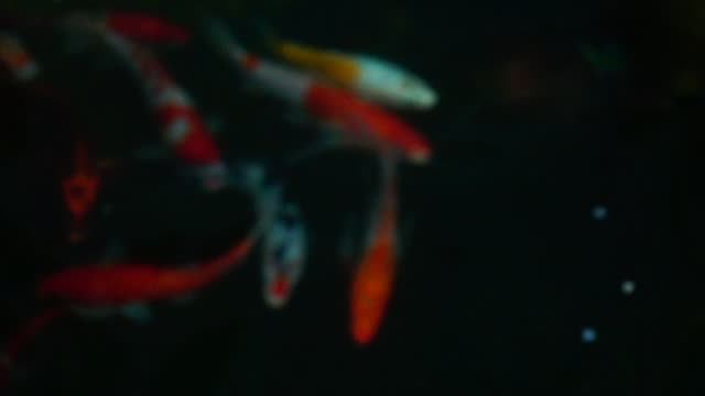blurred of koi fishes in slow motion - koi carp stock videos & royalty-free footage