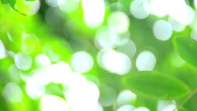 Turva luz suave na árvore folhas