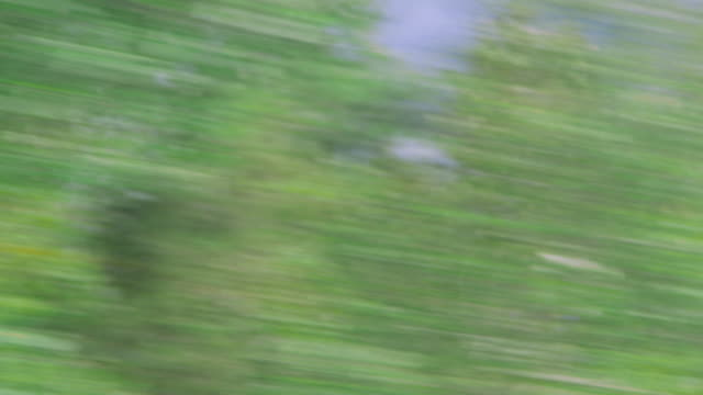 blurry view of trees and sky speeding by - schwindelig stock-videos und b-roll-filmmaterial