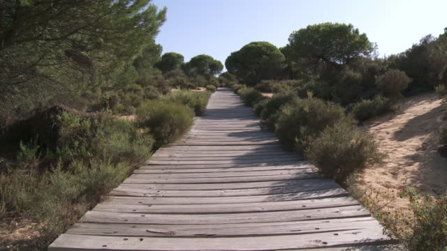 vídeos y material grabado en eventos de stock de ms boardwalk at donana national park / el rocio, andalusia, spain       - parque nacional