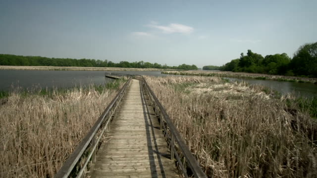 stockvideo's en b-roll-footage met boardwalk - ontario canada