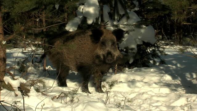 stockvideo's en b-roll-footage met beren voeden - watervorm