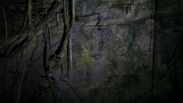 boas hang and coil in bat cave while bats fly around - cave stock videos & royalty-free footage