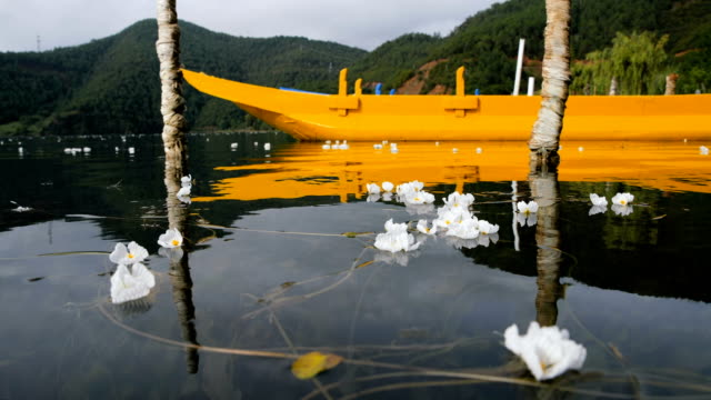 boat and water plant (ottelia acuminata) blossom in lugu lake - water plant stock videos and b-roll footage