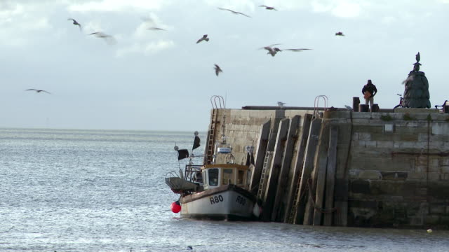 vidéos et rushes de a boat bobbing moored to a harbour jetty - mouette