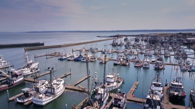 boat filled marina of westport, washington - jachthafen stock-videos und b-roll-filmmaterial