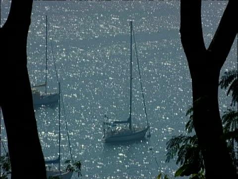 stockvideo's en b-roll-footage met boat floats in sea behind tree rio de janeiro brazil - plant attribute