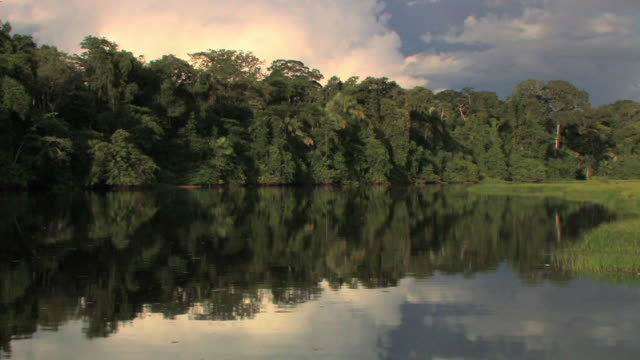 WS TS boat POV of forest from river/ Manu National Park, Peru