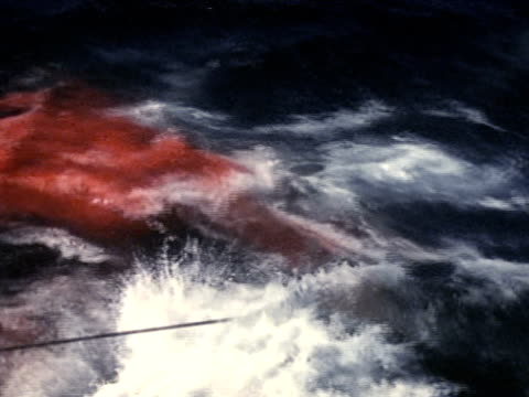 harpoon line reaching into water white top of ocean red w/ whale blood ws men preparing to fire another harpoon ws whale struggling in water red w/... - arpone video stock e b–roll