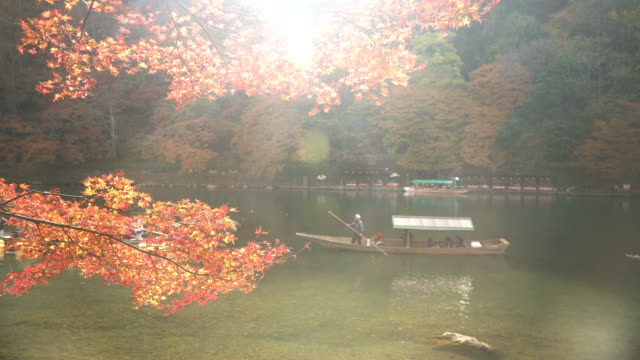 boat in katsura river amid autumn leaf forest at arashiyama - kyoto stock videos and b-roll footage