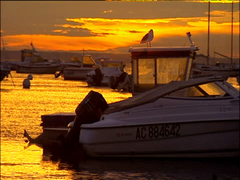 boat moored at sea in calm waters with seagull perched on top vibrant and orange dusk sky reflected on shimmering surface of water arcachon france - arcachon stock videos and b-roll footage
