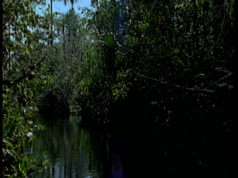 MS POV of boat moving along river with overhanging vegetation, South America