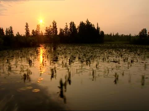 stockvideo's en b-roll-footage met pov boat moving on okefenokee swamp at sunrise, georgia/florida, usa - wildreservaat