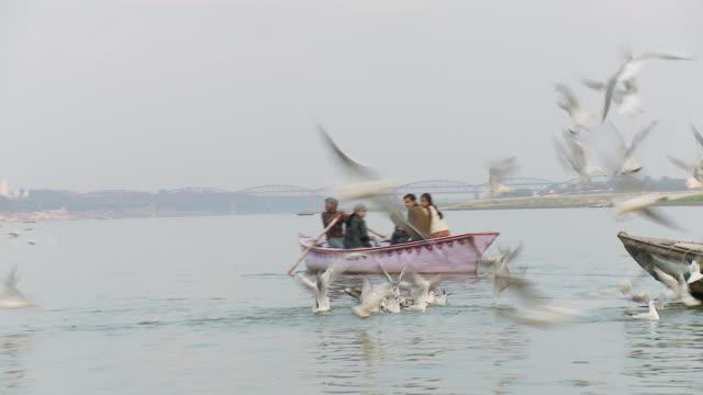 ws boat moving with family pilgrim and seagulls / varanasi, uttar pradesh, india - pilgrim stock videos & royalty-free footage