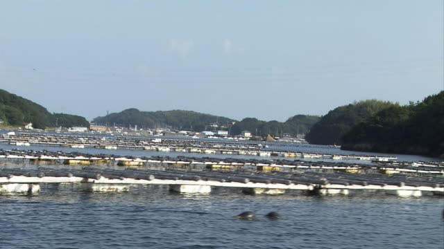 Boat Point Of View Boat cruising past numbers of Akoya pearl oyster culture farms