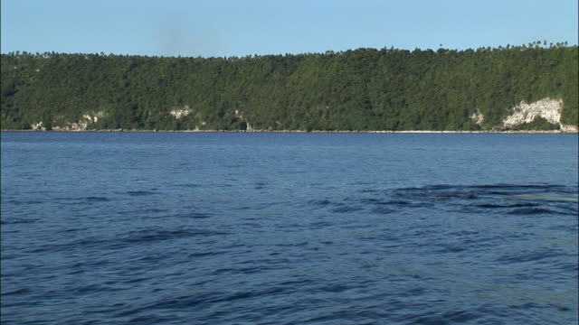 Boat point of view looking onto shoreline / humpback whale (Megaptera novaeangliae) lunging out of water by boat / Tonga, South Pacific