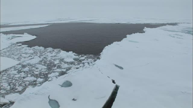vídeos de stock, filmes e b-roll de ws boat point of view moving through ice/ north pole - pólo norte