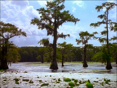 boat point of view of cypress trees with spanish moss in swamp / caddo lake, texas - epiphyte stock videos & royalty-free footage