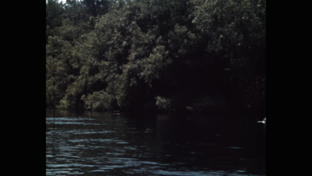 boat point of view of river by forest, florida, usa - 海上の視点点の映像素材/bロール