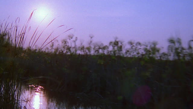 boat point of view weaving through grass in marsh / botswana, southern africa - southern africa stock videos & royalty-free footage