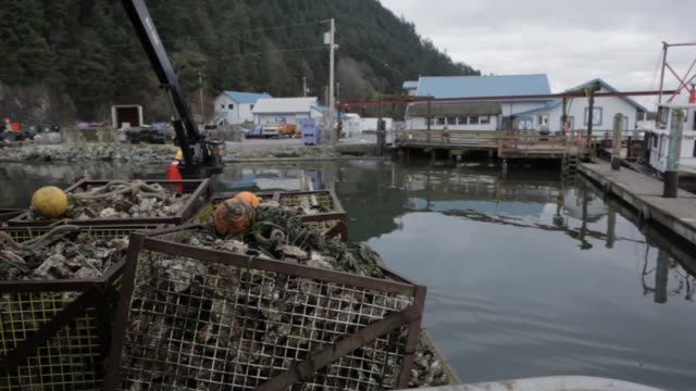 boat pulls into dock workers remove crates full of oysters from crane - oyster shell stock videos & royalty-free footage