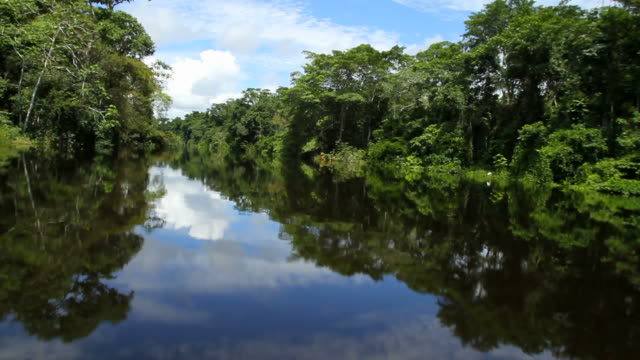 boat riding in the peruvian rainforest - rainforest stock videos & royalty-free footage