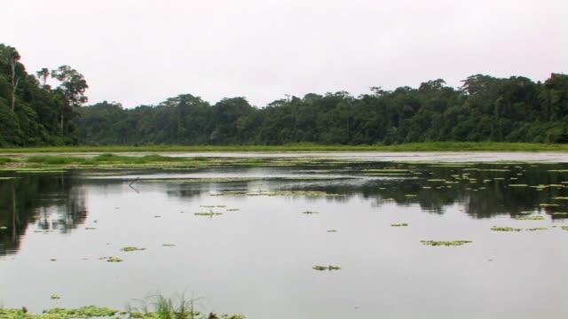 WS TS boat POV of river/ Manu National Park, Peru