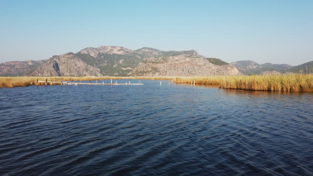 boat roving on dalyan river between reeds - backwater stock videos & royalty-free footage