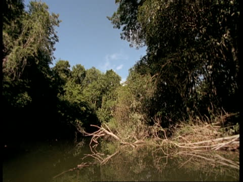 WA POV of boat travelling along river through overhanging rainforest, Amazon