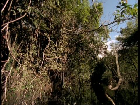 WA POV of boat travelling through overhanging rainforest, Amazon