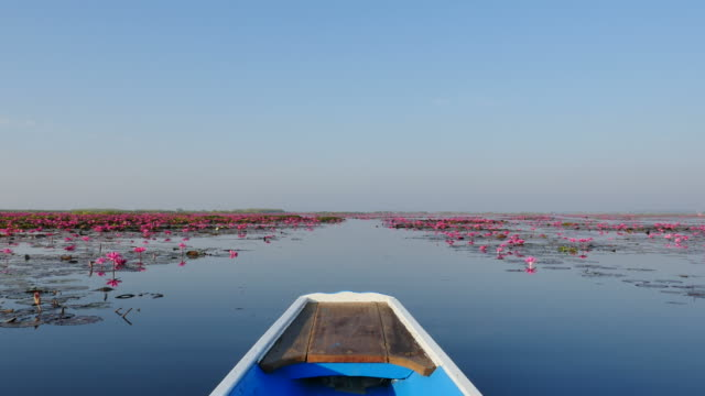 Boat trip at pink lotus lake, Thailand.
