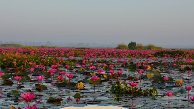stockvideo's en b-roll-footage met boottocht op de roze lotus lake, udon thani provincie, thailand. - in kleermakerszit