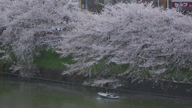 boat under cherry blossoms alongside moat, tokyo - kanto region stock videos and b-roll footage
