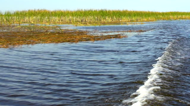 hd: boat wake - everglades national park - boat point of view stock videos & royalty-free footage