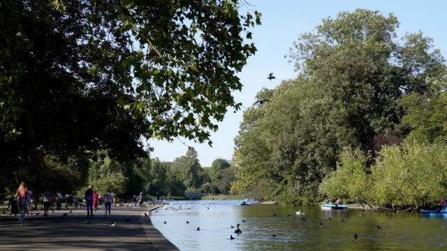 boating lake in london regent's park - lakeshore stock videos & royalty-free footage