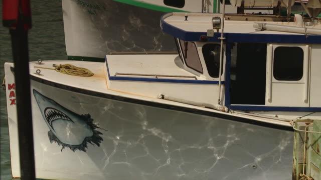 vídeos de stock, filmes e b-roll de boats docked at the marina - representação de animal