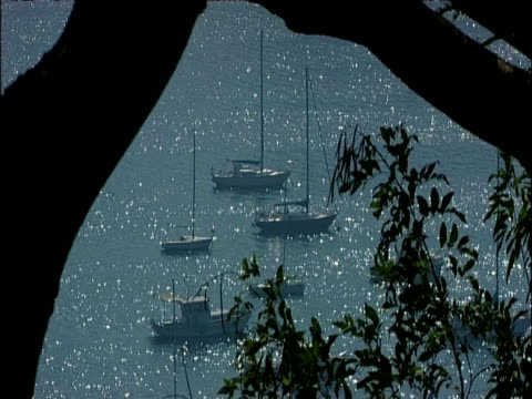 stockvideo's en b-roll-footage met boats float in glittering sea with tree in foreground rio de janeiro brazil - plant attribute
