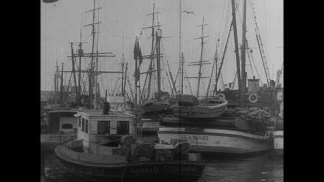 Boats in Fisherman's Wharf harbor