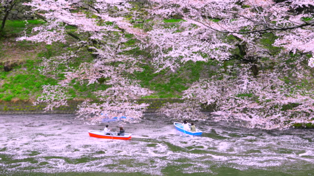 boats move over the myriads of fallen cherry blossoms (hanaikada) and make trails on the water at chidorigafuchi mall. - moat stock videos and b-roll footage