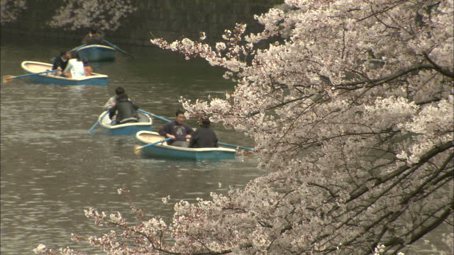 ms boats on chidorigafuchi moat path with cherry blossoms in foreground, marunouchi, tokyo, japan - kanto region stock videos and b-roll footage
