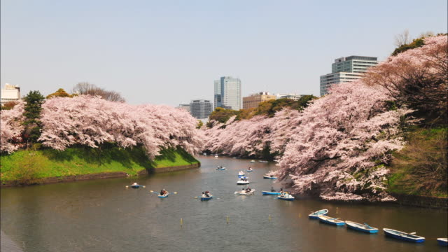 t/l ws ha boats on river in chidorigahuchi park with cherry blossoms, tokyo, japan - kanto region stock videos and b-roll footage