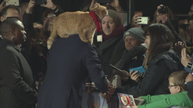 Bob The Cat James Bowen at 'A Street Cat Named Bob' World Premiere at The Curzon Mayfair on November 3 2016 in London England