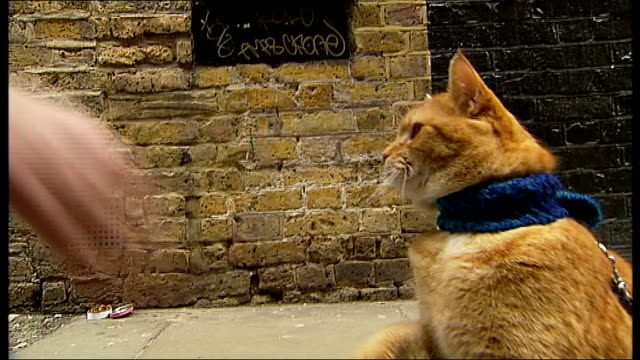 bob the london busker cat heads to hollywood england london covent garden various of bowen giving bob 'high five' - high five stock-videos und b-roll-filmmaterial