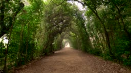 Boboli Gardens. Florence, Italy.  Walking along shady arched path in Boboli Garden park