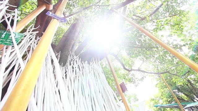 BodhiTree at Wat Chet Yot Chiangmai Thailand