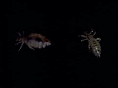 cu body lice against black background, united kingdom - rejection stock videos & royalty-free footage