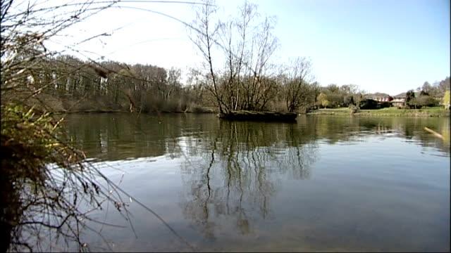body of teenager found in pond in cobham england surrey cobham heathfield pond ext general view of heathfield pond bush next to pond pull general... - コブハム点の映像素材/bロール