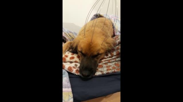 stockvideo's en b-roll-footage met boeten nearly falls asleep while receiving a very relaxing massage. adorable! - genomen met mobiel apparaat